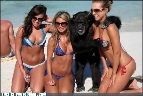Animal Bomb beach chimp ladybags - 4524704768