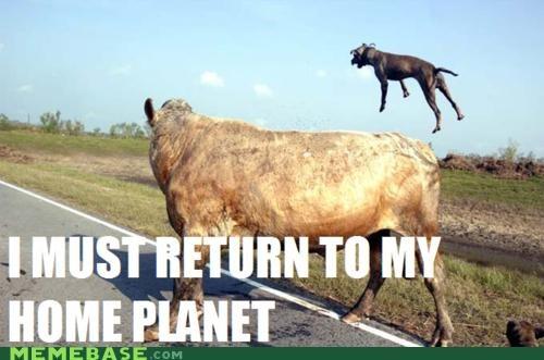 alien animemes buzz lightyear cow dogs flying - 4525061120