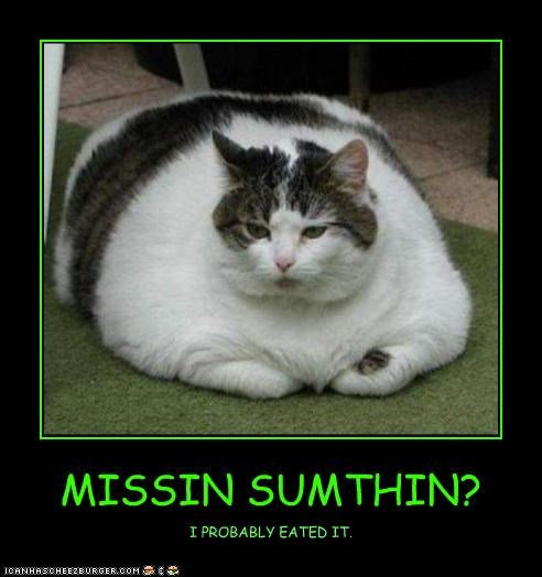 Cheezburger Image 4525502976