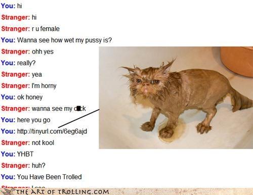 Awkward kitty Omegle wet - 4525513728