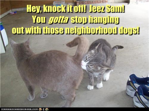 Hey, knock it off! Jeez Sam! You stop hanging out with those neighborhood dogs! gotta