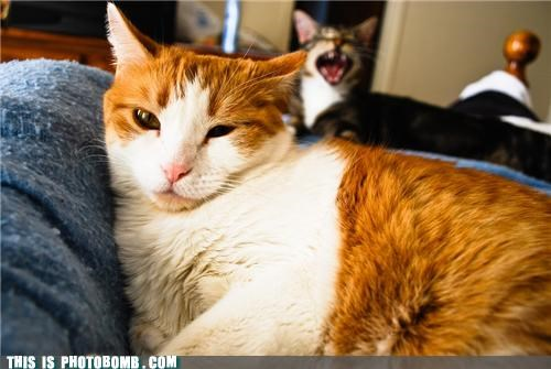 animals Cats Caturday photobomb - 4525767680