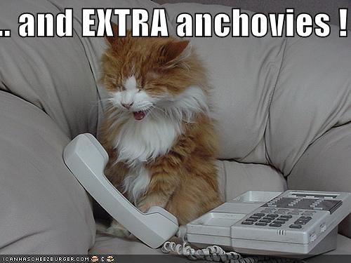 And Extra Anchovies I Can Has Cheezburger