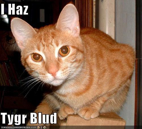 Cheezburger Image 4526876672