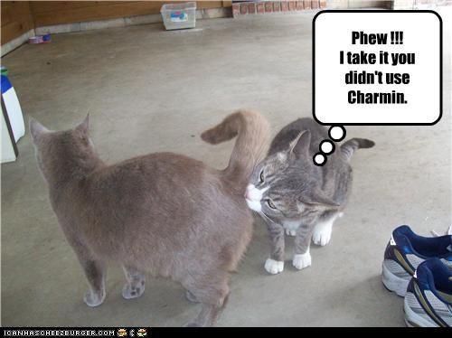Phew !!! I take it you didn't use Charmin.