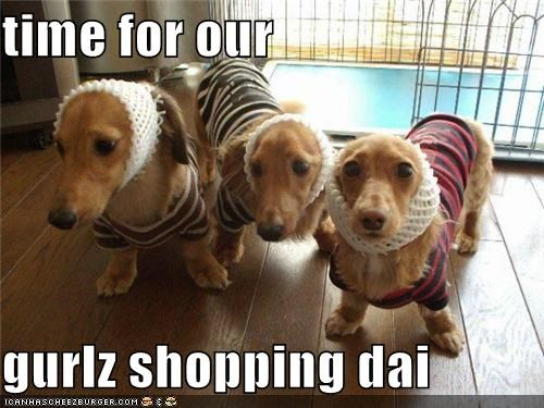 dachshund,dachshunds,dressed up,excited,fashion,girls,Hall of Fame,headband,headbands,long haired,outfit,outfits,shopping,sweater,sweaters,time