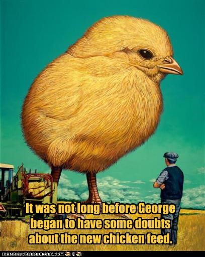 It was not long before George began to have some doubts about the new chicken feed.