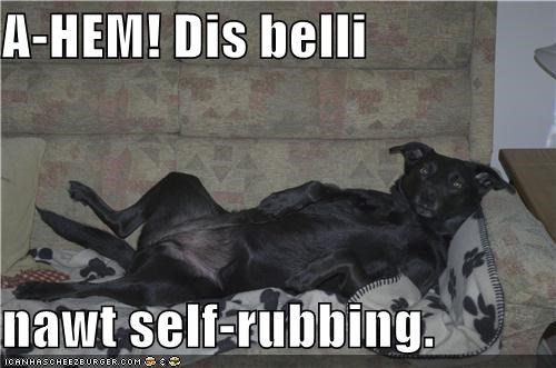 ahem belly do want just saying labrador not rub rubbing self subtle tummy - 4528252160