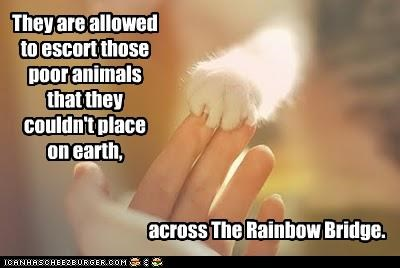They are allowed to escort those poor animals that they couldn't place on earth, across The Rainbow Bridge.