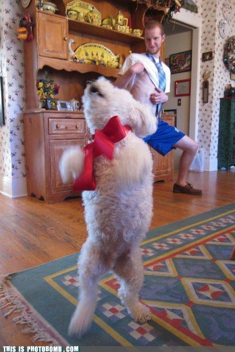 animals dogs nipples photobomb sexy dance wtf - 4528780032