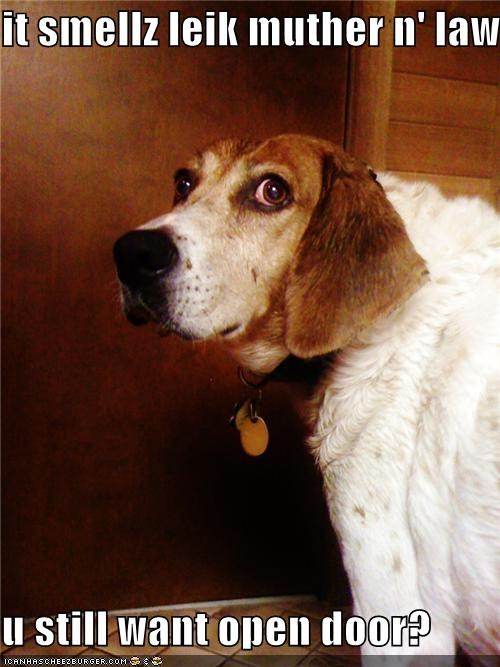 afraid,asking,beagle,do not want,door,mother in law,open,question,smell,warning