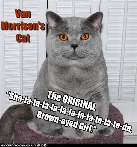 """""""Sha-la-la-la-la-la-la-la-la-la-la-te-da, Brown-eyed Girl."""" Van Morrison's Cat The ORIGINAL"""