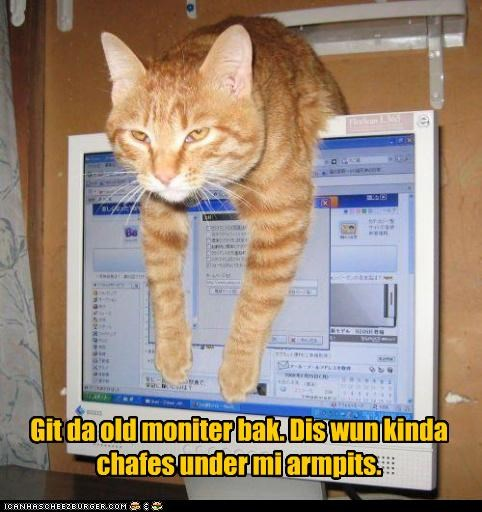 armpits back caption captioned cat chafing dislike do not want Hall of Fame monitor old request tabby - 4529188352