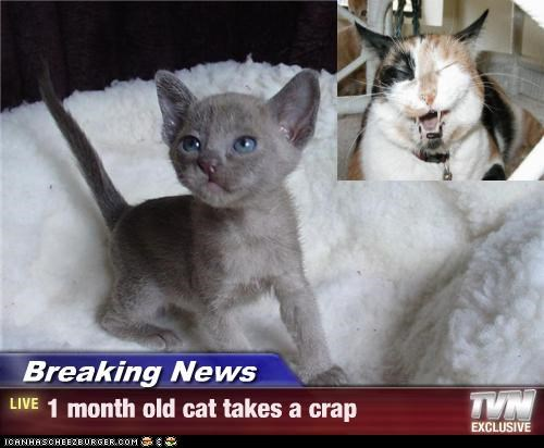 Breaking News - 1 month old cat takes a crap
