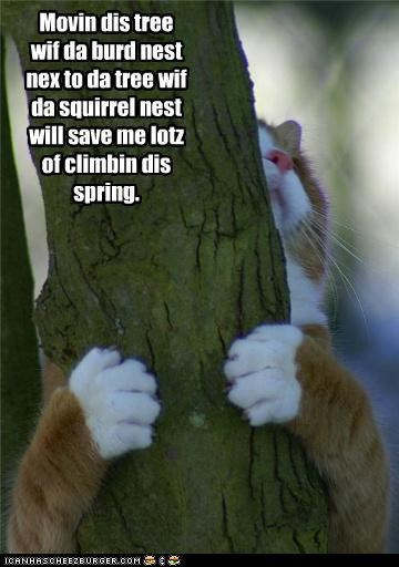bird caption captioned cat moving nest plans spring squirrel tree