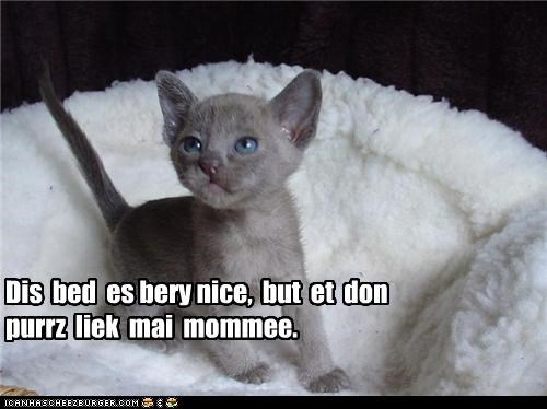 bed caption captioned cat comparing difference do want doesnt kitten mom mother nice - 4529519616