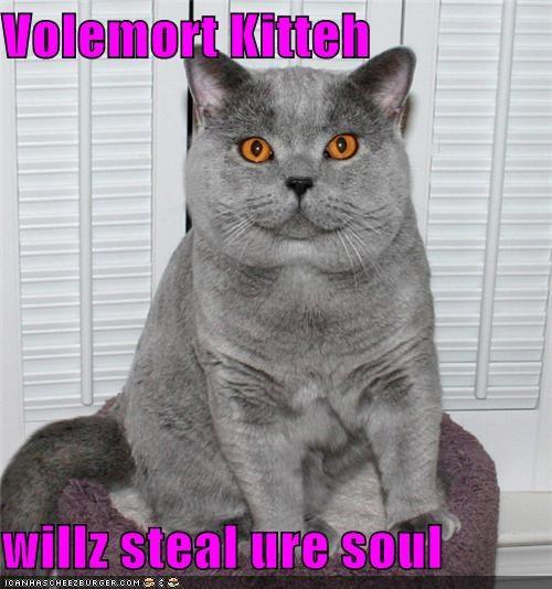 Cheezburger Image 4529617664