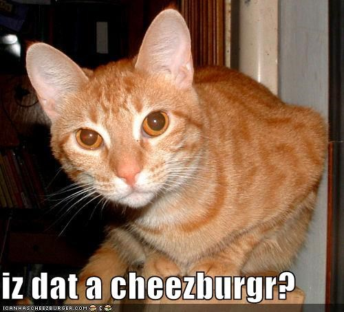 Cheezburger Image 4530177024