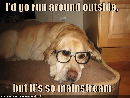 excuse,glasses,Hall of Fame,hipster,hypothetical,labrador,lazy,mainstream,outside,run