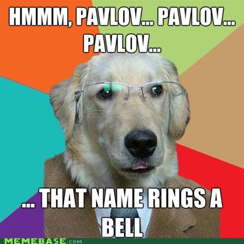 animemes dogs pavlov rings a bell