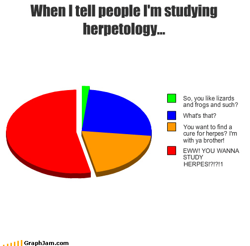 derp herp herpes lizards Pie Chart school studying - 4530370304