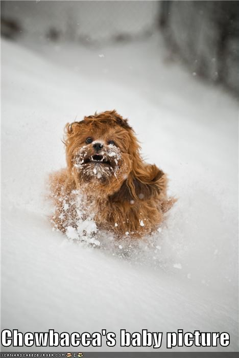 baby picture,best of the week,chewbacca,frolicking,Hall of Fame,i has a hotdog,picture,puppy,running,snow,whatbreed,winter,wookie