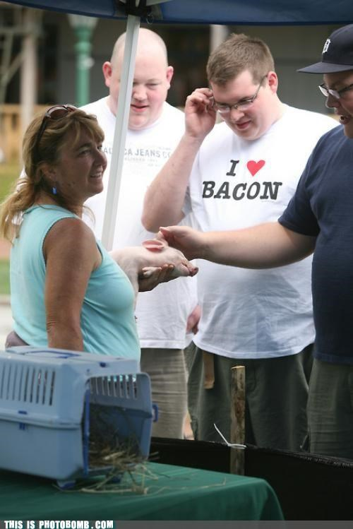 animals,bacon,carnivores,ominous,photobomb,pig
