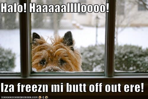 calling cold do not want freezing frozen hello outside snow snowy terrier whatbreed winter - 4532514048