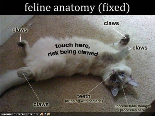 anatomy attack claws dont-like-cats scary teeth - 4532717568