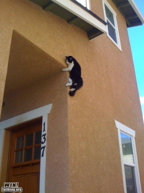 animals Cats parkour wtf - 4532750080