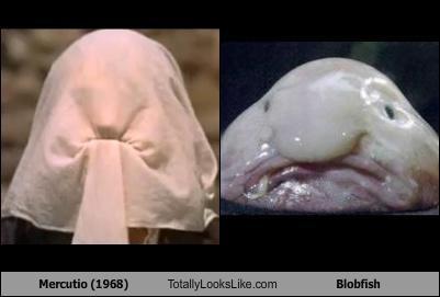 animals Blobfish fish - 4532906752
