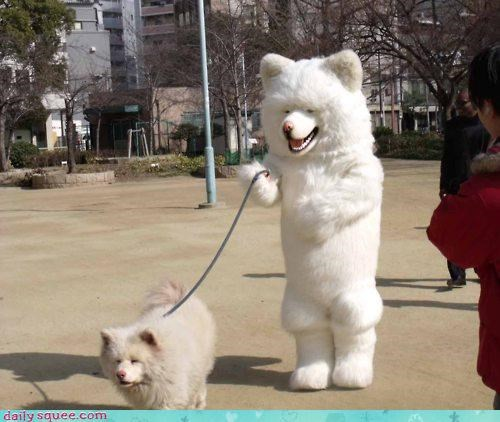 acting like animals adage ashamed costume do not want embarrassed embarrassing resemblance shiba inu walk walking - 4533325824
