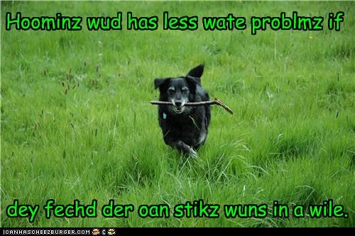 advice border collie do it yourself fetch fetching humans mixed breed stick suggestion wisdom - 4534180352