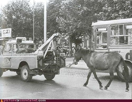 animals horses trucks vintage wtf