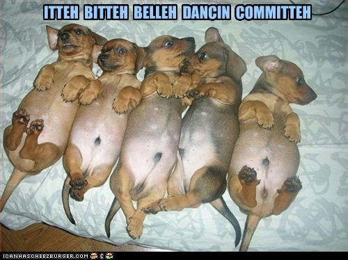 belly belly dancing best of the week committee dachshund dachshunds dancing Hall of Fame i has a hotdog itty bitty puppies puppy