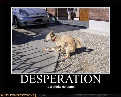 classic desperation dogs duck humping - 4534487552