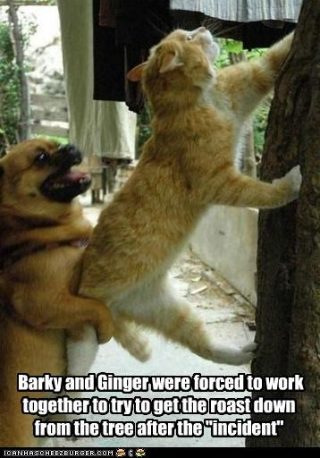 "Barky and Ginger were forced to work together to try to get the roast down from the tree after the ""incident"""