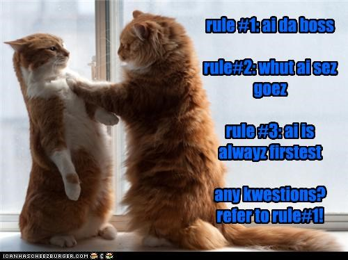 boss,caption,captioned,cat,Cats,Hall of Fame,rule,rules,tabby