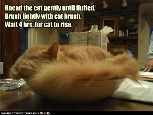 asleep,bowl,caption,captioned,cat,directions,instructions,recipe,sleeping