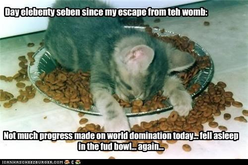 again asleep bowl caption captioned cat day elebenty FAIL fell fell asleep food journal kitten progress seven world domination - 4535006208