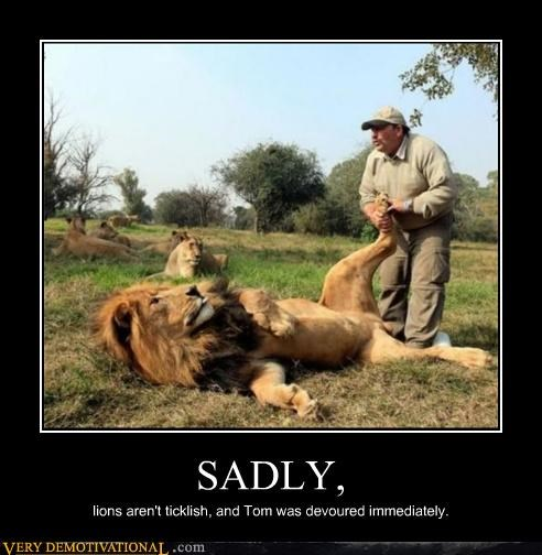 animals bad idea lion trainer wtf - 4535696640