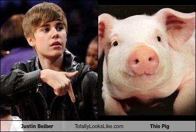 animals,justin bieber,pig