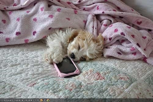 asleep,covered up,cyoot puppeh ob teh day,phone,puppy,sleeping,texting,wait,waiting,whatbreed