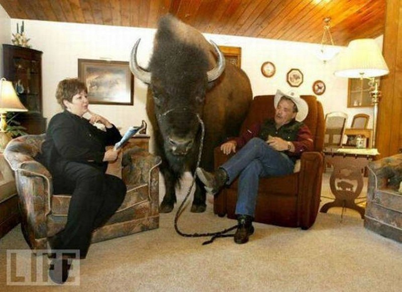 unusual people pets surprise - 4536325