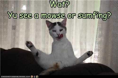 Wat? Yu see a mowse or sumfing?