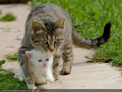 baby,cyoot kitteh of teh day,kitten,mama,mom,protect