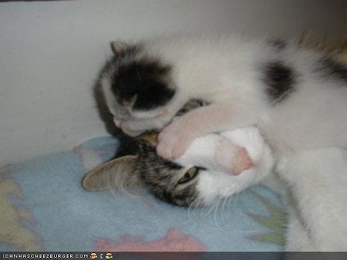annoyed baby cyoot kitteh of teh day drink head kitten mom newborn - 4536360192