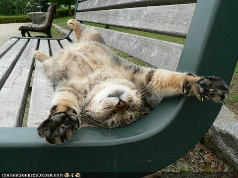 bench cyoot kitteh of teh day nap relaxing sleeping stretched out - 4536366080