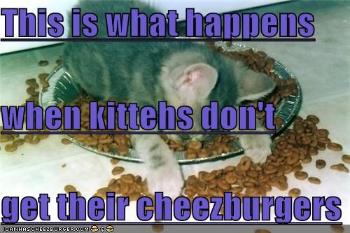 Cheezburger Image 4536537856