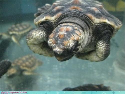 angry arms baby cross crossed grumpy sea turtle squee spree upset - 4536539136